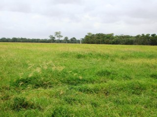View profile: 904 Acres of high carrying capacity coastal grazing